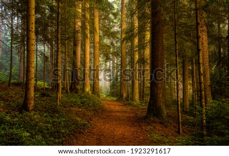 Pine forest grove trail view. Pine forest scene. Trail in pine forest. Pine forest trees Royalty-Free Stock Photo #1923291617