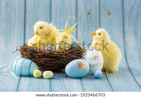 Blue, yellow, white eggs in the nest and yellow chicks on a blue wooden background. The minimal concept. An Easter card with a copy of the place for the text. Royalty-Free Stock Photo #1923466703