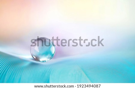 Beautiful clean transparent bright drop of water on feather in light blue and purple colors, macro. Tender image of beauty of environment and nature. Royalty-Free Stock Photo #1923494087