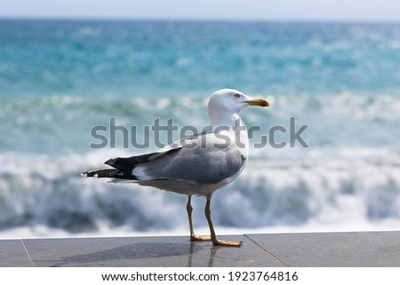 Seagull in summer on the beach Royalty-Free Stock Photo #1923764816