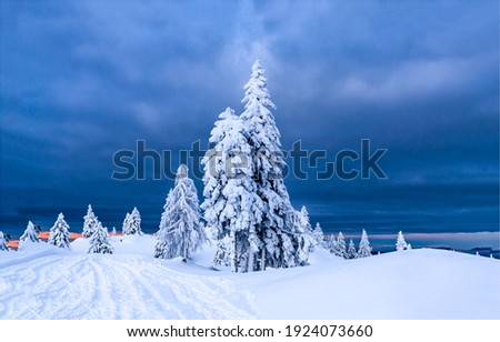 Winter snowy fir trees landscape. Snow covered fir trees in winter landscape. Snowy fir tree in winter. Winter snow fir trees view Royalty-Free Stock Photo #1924073660