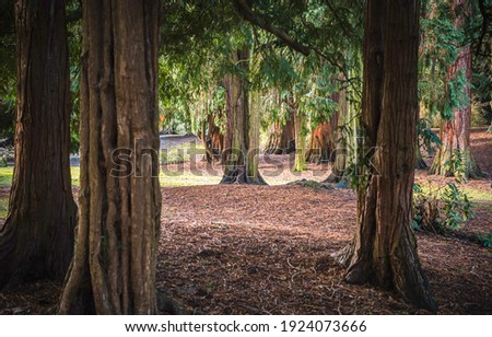 Tree trunks in forest. Forest tree trunks view. Tree trunks. Forest tree trunks Royalty-Free Stock Photo #1924073666