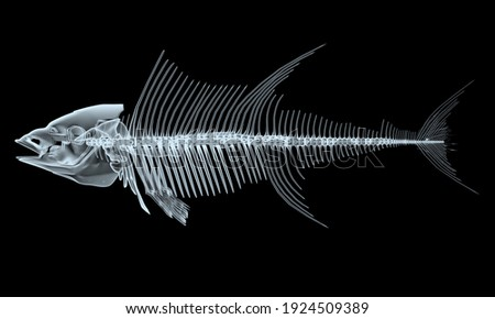 fish x-ray skeletons isolated on black background, 3d illustration