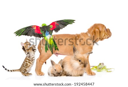 group of exotic pets. isolated on white background #192458447