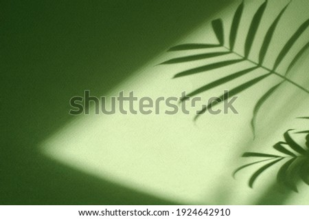 Green background with shadow of palm leaves. Ecology, nature, purity and authenticity concept. Texture template for design, mock up, wallpaper, poster, banner, announcement, invitation, greeting card. Royalty-Free Stock Photo #1924642910