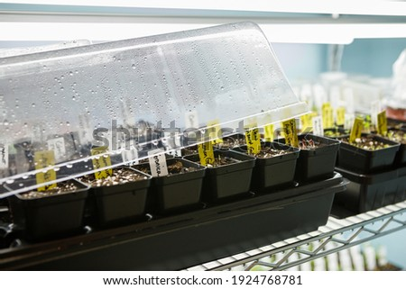 Tray of seed pots germinating under a humidity dome under LED grow lights indoors Royalty-Free Stock Photo #1924768781