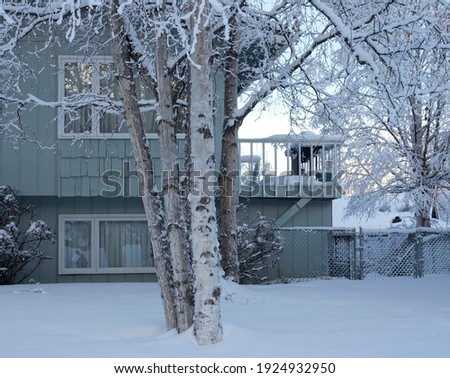 A view of a Quaking Aspen tree and branches covered in snow in winter against a background of a green house and neighborhood; as seen in Anchorage, Alaska in the winter of 2020. Royalty-Free Stock Photo #1924932950