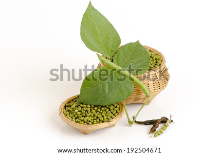Green Bean on white background #192504671