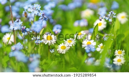 Meadow with lots of colorful spring flowers on sunny day. Nature floral background in early summer with fresh green grass. Royalty-Free Stock Photo #1925289854