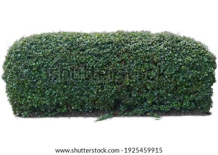 Long bush horizontal isolated on white background Royalty-Free Stock Photo #1925459915