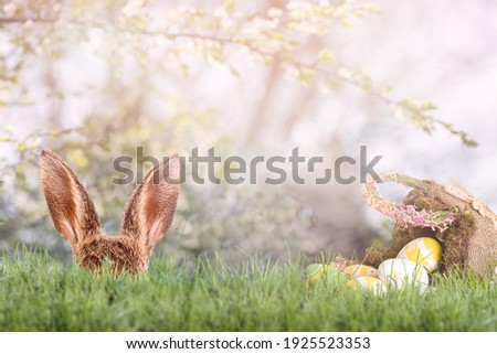Easter bunny hides behind blades of grass with an Easter basket and Easter eggs at Easter time Royalty-Free Stock Photo #1925523353