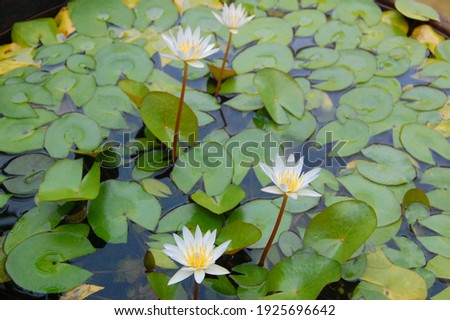 picture of lotus flower on the man made pond taken while a retreat