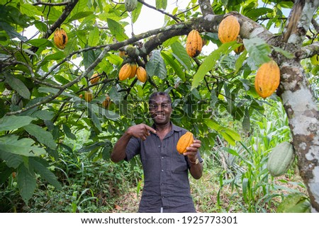 A satisfied farmer on his cocoa plantation. Royalty-Free Stock Photo #1925773301