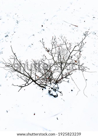 trees and twigs in snowy weather Royalty-Free Stock Photo #1925823239