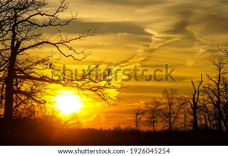 Sunset sky clouds tree branches. Sunset tree branches. Sunset tree sky background. Sunset landscape Royalty-Free Stock Photo #1926045254