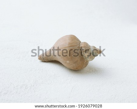 Spiral shell of sea snail on white background. Mollusk carbonate conch. Royalty-Free Stock Photo #1926079028