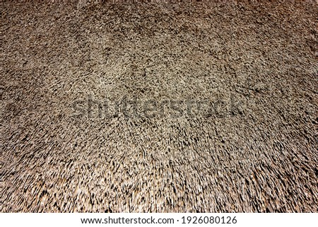 Fragment of a thatched roof, side view. The roof of the house is covered with dry thatch. View of the ends of the straw covering the roof of the barn. Royalty-Free Stock Photo #1926080126