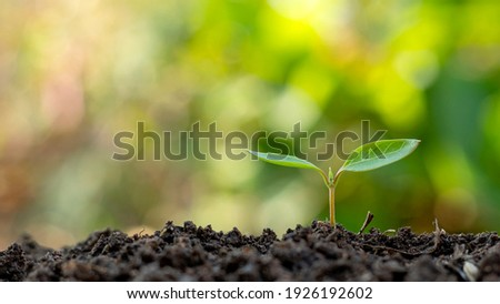 Small trees with green leaves, natural growth, and sunlight, the concept of agriculture, and sustainable plant growth. Royalty-Free Stock Photo #1926192602