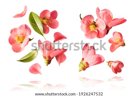 set with  beautiful spring pink flowers flying in the air isolated on the white background. Levitation conception. High resolution image Royalty-Free Stock Photo #1926247532