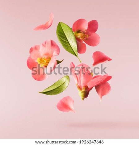 A beautiful image of sping pink flowers flying in the air on the pastel pink background. Levitation conception. Hugh resolution image Royalty-Free Stock Photo #1926247646