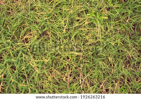 Abstract natural background. Collection with different colour tones of green grass, copy space. Autumn mood. For design wallpaper screensaver web backdrop. Light Pale matte