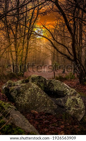 Autumn forest trail mist. Misty forest trail Trail in forest mist. Forest trail in mist autumn Royalty-Free Stock Photo #1926563909