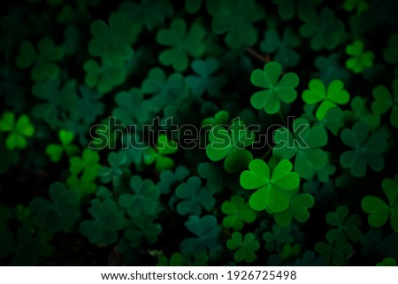 Small green Clover leaves pattern background, Natural and St. Patrick's day background and shamrock wallpaper. vacation and holiday clovers symbol,Spring concept.
