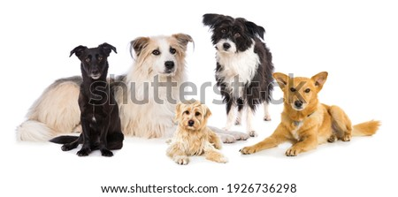 Group of cross breed dogs isolated on white background Royalty-Free Stock Photo #1926736298