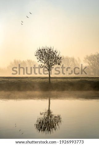 Single lone tree at dawn sunrise standing on river bank with mist and fog rising from canal birds flying in formation above reflected in calm still water foggy misty forest in landscape background Royalty-Free Stock Photo #1926993773