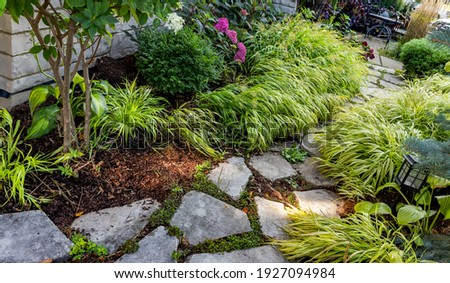 A quaint limestone path bordered with chartreuse Japanese forest grass and bloomstruck endless summer hydrangeas Royalty-Free Stock Photo #1927094984