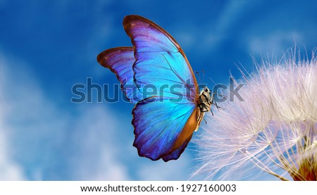 Natural pastel background. Morpho butterfly and dandelion. Seeds of a dandelion flower on a background of blue sky with clouds. Copy spaces Royalty-Free Stock Photo #1927160003