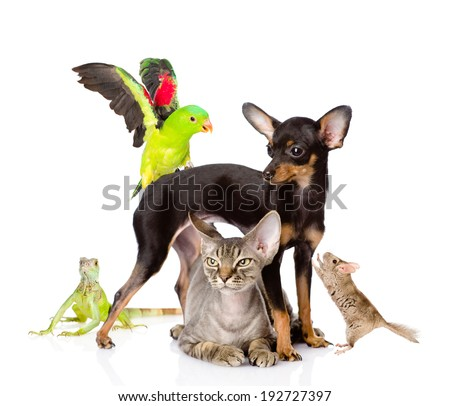 group of exotic pets. isolated on white background #192727397