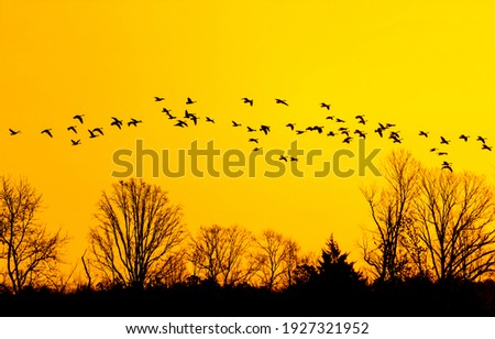 Flock of birds flies to warmer climes at sunset. Sunset birds silhouettes. Birds silhouettes at sunset. Birds silhouettes on sunset sky Royalty-Free Stock Photo #1927321952