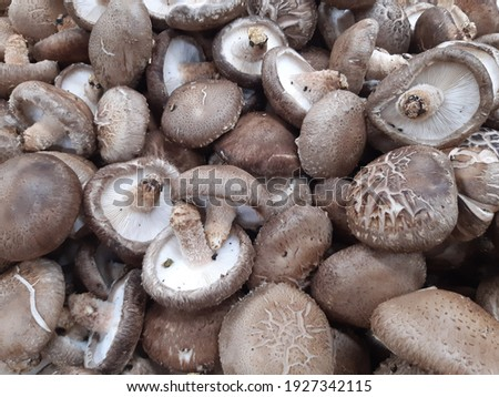 A picture of shiitake mushroom that grew up in Korea. Many shiitake mushrooms