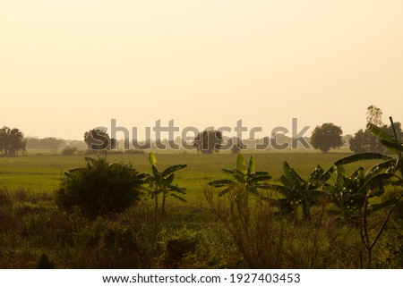 Foggy evening landscape of rural countryside photo in Thailand, banana trees and small bushes under concept of dawn dusk in rural area with empty copy space for text quote caption for background use