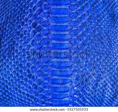 Blue snake skin background, close-up texture picture