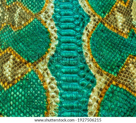 Green and yellow snake skin background, close-up texture picture
