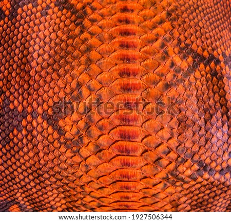 Orange snake skin background, close-up texture picture