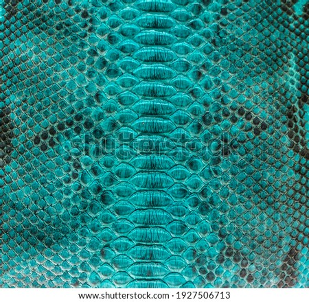 Turquoise snake skin background, close-up texture picture