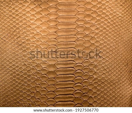 Brown snake skin background, close-up texture picture