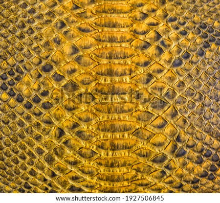 Yellow snake skin background, close-up texture picture