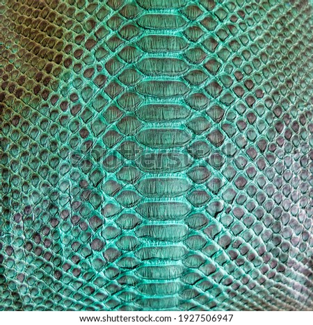 Green snake skin background, close-up texture picture