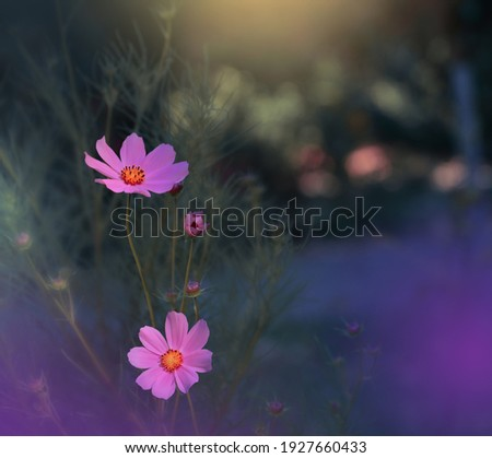 Beautiful Pink Nature Background.Macro Shot of Magic Flowers.Creative Floral Art Design.Magic Light.Extreme Close up Photography.Conceptual Abstract Image.Artistic Natural Wallpaper.Violet Color.Plant