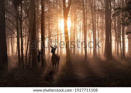 Young deer in a sunrise and misty winter forest. Natural woodland dawn landscape in Norfolk England. Dark shadows and golden morning sun Royalty-Free Stock Photo #1927711508