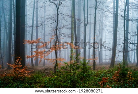 Misty forest trees in autumn. Autumn forest mist. Forest mist in autumn. Forest mist scene Royalty-Free Stock Photo #1928080271