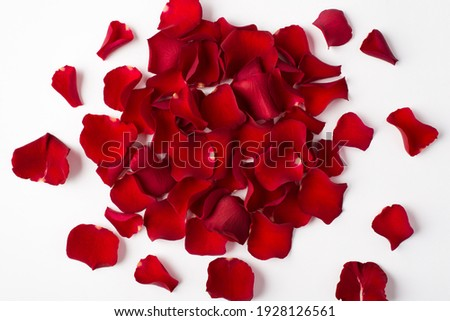 Photo overhead of roses and petals isolated on the white background Royalty-Free Stock Photo #1928126561
