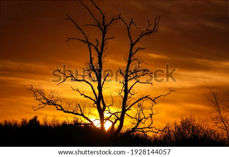 Sunset tree branches silhouette view. Sunset tree silhouette. Sunset tree view. Sunset tree silhouette scene Royalty-Free Stock Photo #1928144057