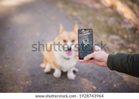 a young caucasian male taking a picture of a welsh corgi pembroke dog