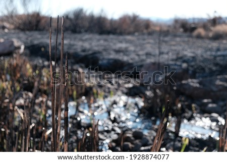 Forest Fire Aftermath. Wetlands Park Fire Aftermath. Royalty-Free Stock Photo #1928874077