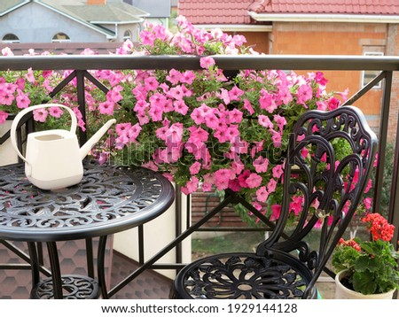 Blooming beautiful pink Petunia flowers and white watering can stands on table. Metal forged furniture on balcony on sunny summer day. Flowers on balcony Royalty-Free Stock Photo #1929144128